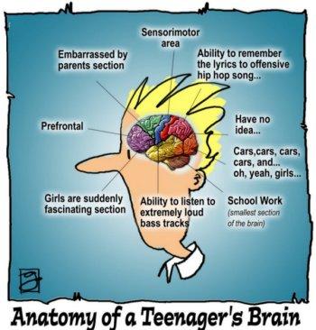 For Teenage Brains Importance Of >> The Teenage Brain